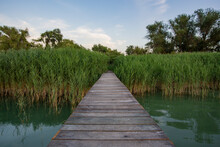 Narrow Boat Jetty Between Reeds. Narrow Path From Lake Pier Into Green Dense Reeds With Trees Above The Water. Pier Footpath Made Of Wood Planks Over A Wetland Between High Green Reeds