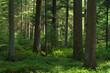 canvas print picture - im schwarzwald mit licht und schatten