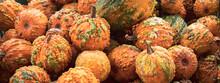 Basket Of Pumpkins At Farmers Market Banner