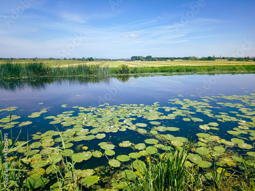 Fotografie, Obraz Typical image of the Dutch polder landscape with its green meadows and ditches i