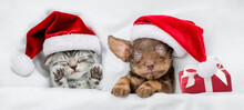 Tiny Kitten And Dachshund Puppy Wearing Santa Hats Sleep Together  With Gift Box Under A White Blanket On A Bed At Home. Top Down View