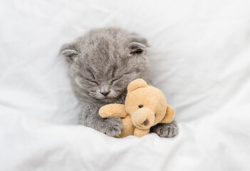 Cozy kitten sleeps under blanket on a bed at home and hugs favorite toy bear. Top down view