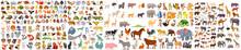 Animal Character Set, Wild Animal Characters, Cute Cartoon Animals, Cute Cartoon Animals, Big Vector Set Of Different World Wild Animals, Mammals