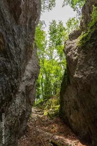 Fotografiet Falaises près de la grotte