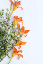 Lilies And Wild Daisies, Bouquet Isolated On White Background, Place For Text