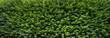Banner Garten Hecke grün