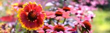 Blumen 1357