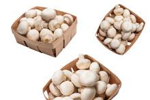 Champignon Mushroom Isolated On White Background.