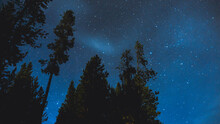 Cloudy Starry Night With Pine Tree Silhouette