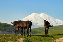 Elbrus Is The Highest Peak In Russia And Europe. Kabardino-Balkaria, View Of Elbrus From Jila-Su. Wild Grazing Black Horses On An Alpine Pasture In The North Caucasus.