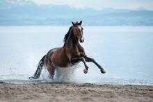 Horse Run In Water On The Beach