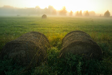 A Beautiful Landscape Of A Misty Morning During Summer. Summertime Scenery Of Northern Europe.