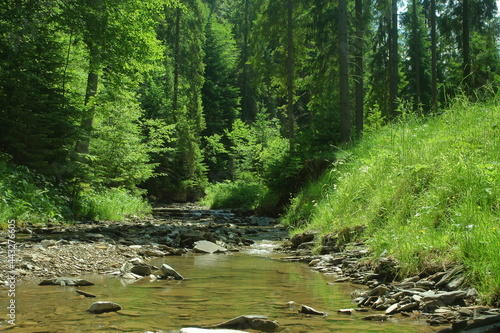 Foto Rushing strem in the summer forest