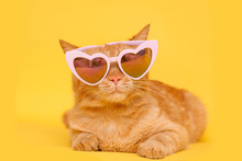 Lovely Fluffy Ginger Wearing Fashion Heart-shaped Glasses. Yellow Background.