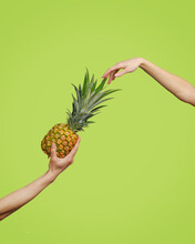 Hand Holds A Mouthwatering Ripe Pineapple. The Concept Of Healthy Eating