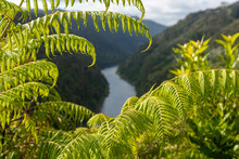 Tour On Untouched Whanganui River And Through The Surrounding Jungle, New Zealand