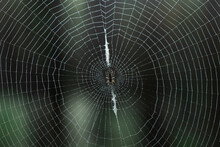 Close-up Of A Round Spider Web With A Spider In The Center In The Forest