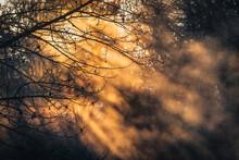 South Waikato - Tokoroa = Early Morning Winter Sunrise