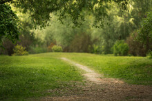 Beautiful Park With Green Grass. Warm Summer