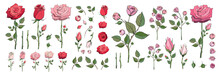 Hand Drawn Rose Bundle. Vector Illustrations Of Flowers And Leaves. Pink And Red Roses Clipart. Rose Bud. Decorative Floral Elements. Perfect For Decorations Wedding Cards Greeting Cards Invitations.