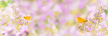 Floral Banner With Blooming Lavender Flowers And Small Skipper Butterflies (Thymelicus Sylvestris) On Blurred Background In Soft Pastel Colors