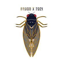 Hand Painted Cicada Illustration