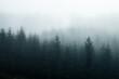 Leinwandbild Motiv Foggy Forest
