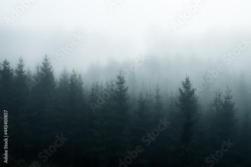 Foggy Forest Fototapeta