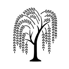 Willow Tree. Black Icon With Tree. Vector Illustration Isolated On White Background. Element For Logo