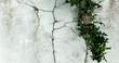 Tekstura szaro zielono, tło z dodatkiem rośliny. Struktura starego muru z pęknięciami, rysy.
