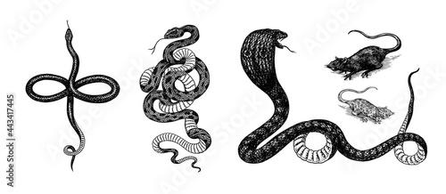 Fotografía Set of snakes