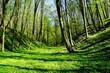 Leśny wąwóz wypełniony soczystą zielenią