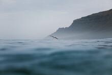Gull Flying Over Calm Blue Sea