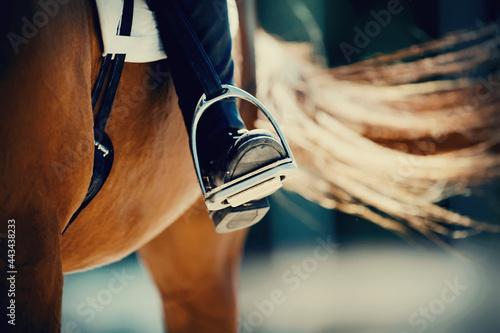 Fototapeta Equestrian sport