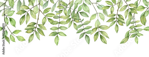 Fotografia Long seamless banner with green leaves. Watercolor botany