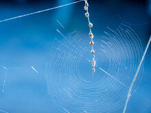 Spider Resembles A Hermit Crab On The Spider's Web
