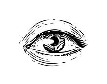 Human Eye Vintage Sketch. Hand Drawn Illustration In Engraving Style