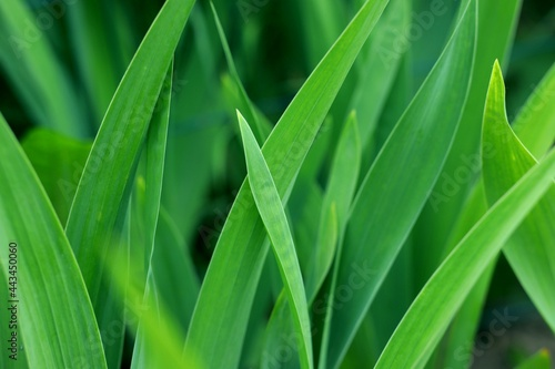 Zielone liście prosto z ogródka.