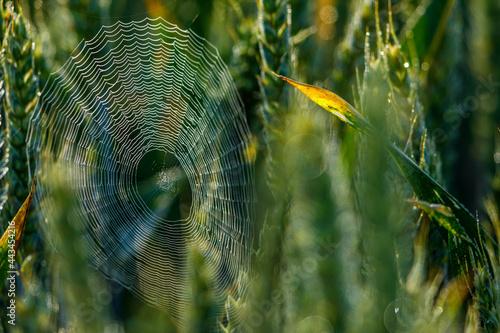 spider web with dew drops Fotobehang