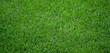 Gepflegter grüner saftiger Rasen - Nahaufnahme mit Tiefenunschärfe
