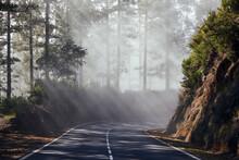 Sunbeams In Fog. Asphalt Road Passes Through Misty Forest In Tenerife. Canary Islands, Spain.