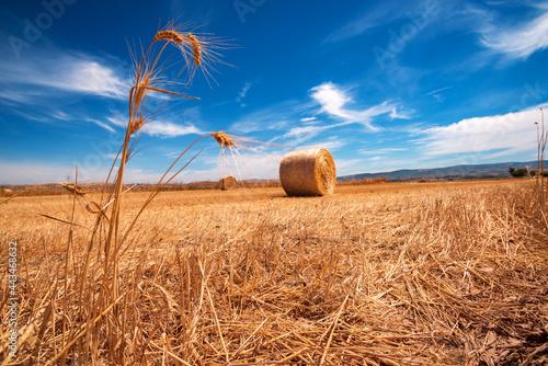 Italia, paesaggio rurale con grano e balle di fieno