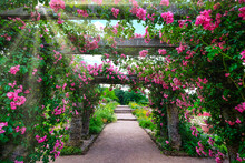 Fairy-tail Path Surrounded By Pink Roses