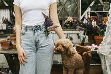 Summer Bouquet Of Lupins In The Pocket Of Jeans Of A Teenage Girl In Jeans And A White T-shirt Stands On A White Veranda With Flowers With A Dog, A Concept Of Summer Vacation And A Simple Living