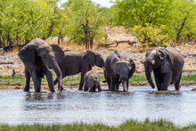 Elefanten Am Wasserloch,  Etosha-Nationalpark, Namibia