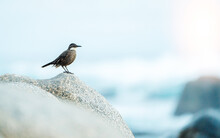 A Bird On A Rock Staring At The Sea