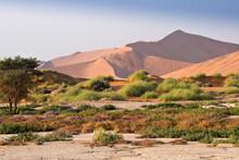 Sand Dunes And Wildflowers At Sossusvlei, Namib-Naukluft Park, Namibia