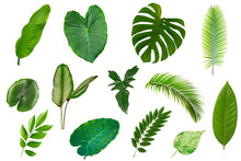 Set Of Tropical Green Leaves Isolated On White Background.