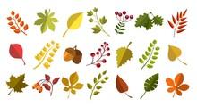 Fall Acorns Leaves Berries
