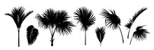 Set Of Black Silhouettes Of Palm Trees, Betel Nut, Coconut Tree, Coconut Leaves.  Botanical And Jungle Leaves Design For Nature Background, Eco And Summer Banner, Wallpaper, Pattern And Prints.